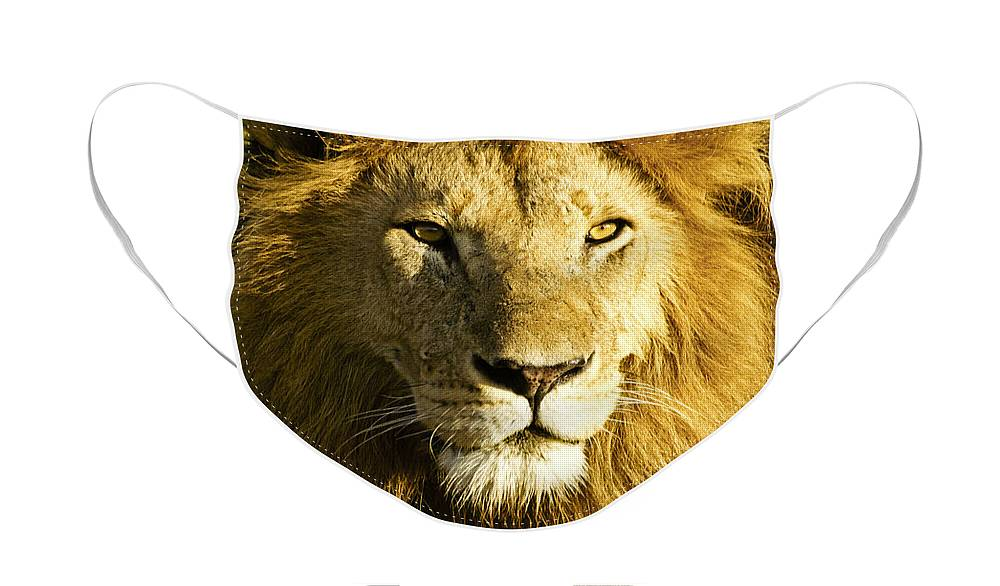 Lion Face Mask featuring the photograph His Royal Highness by Michele Burgess