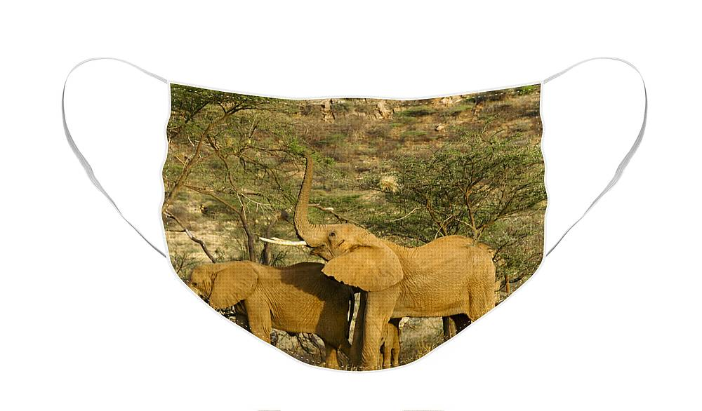 Africa Face Mask featuring the photograph It's a Stretch by Michele Burgess