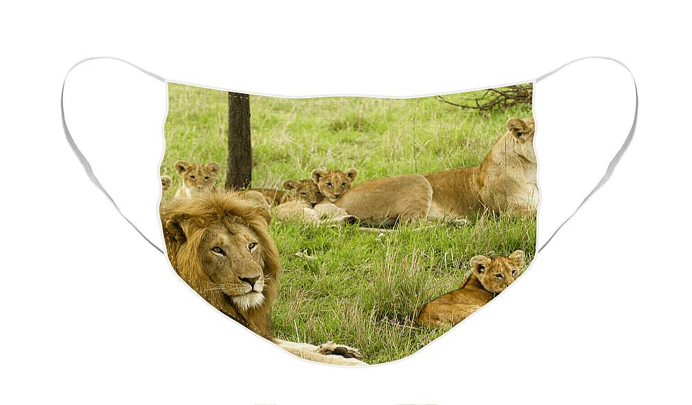 Lion Face Mask featuring the photograph It's All About Family by Michele Burgess