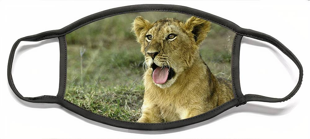 Africa Face Mask featuring the photograph It's Been a Long Day by Michele Burgess