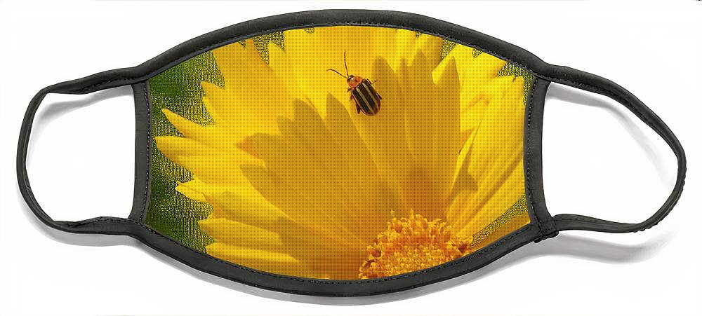 Floral Face Mask featuring the photograph Lady Bug Lookout by Paul Anderson