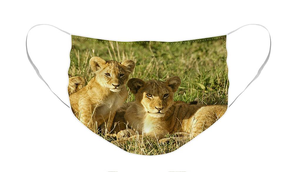 Lion Face Mask featuring the photograph Little Lions by Michele Burgess