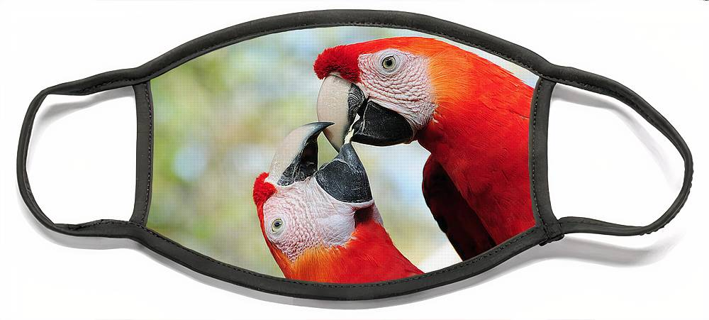 Bird Face Mask featuring the photograph Macaws by Steven Sparks