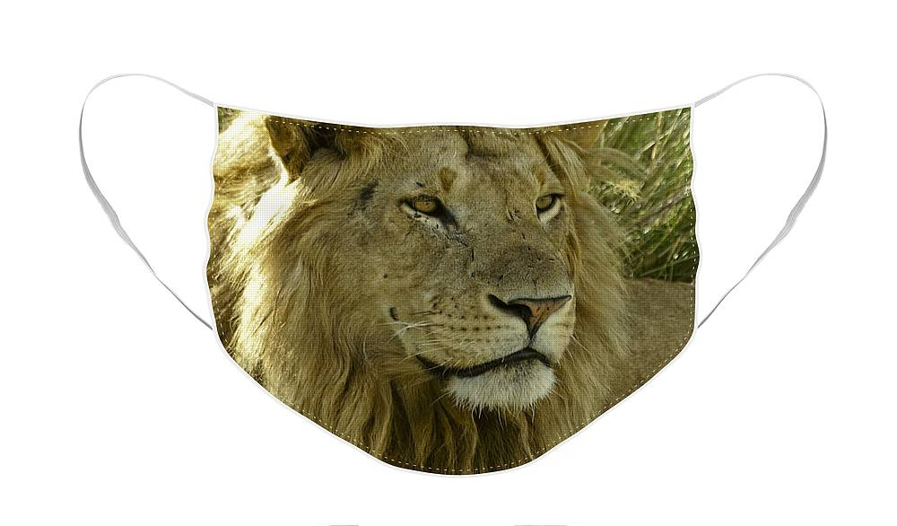 Lion Face Mask featuring the photograph Nice Kitty by Michele Burgess
