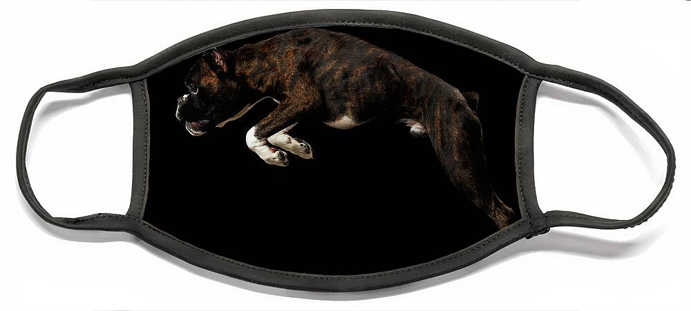 Boxer Face Mask featuring the photograph Purebred Boxer Dog Isolated on Black Background by Sergey Taran