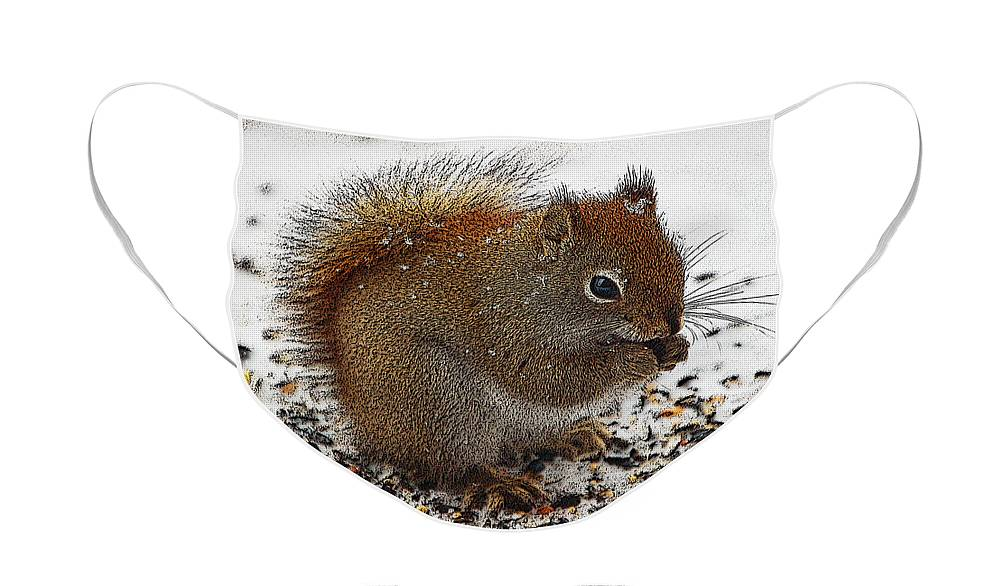 Berry Face Mask featuring the photograph Red Squirrel by Diane E Berry