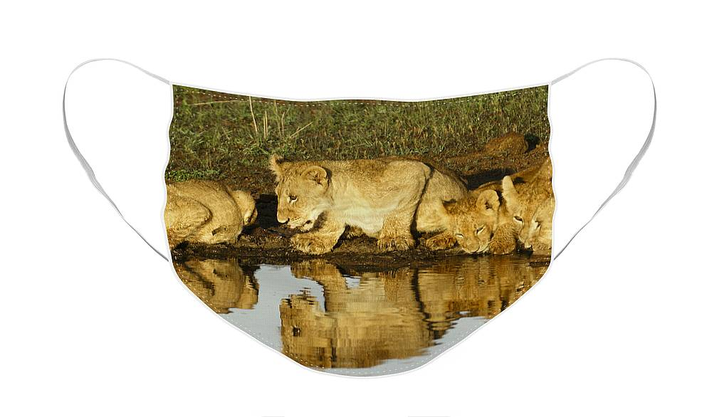 Lion Face Mask featuring the photograph Reflected Lions by Michele Burgess