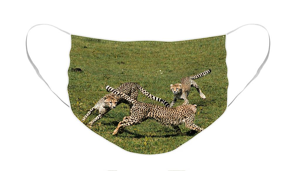 Africa Face Mask featuring the photograph Ring Around the Cheetahs by Michele Burgess