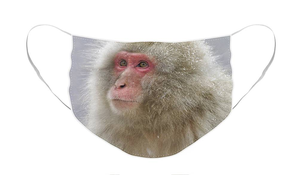 Japan Face Mask featuring the photograph Snow-Dusted Monkey by Michele Burgess