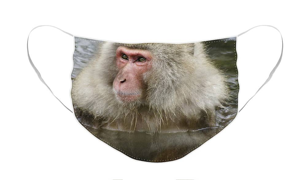 Snow Monkey Face Mask featuring the photograph Snow Monkey Bath by Michele Burgess