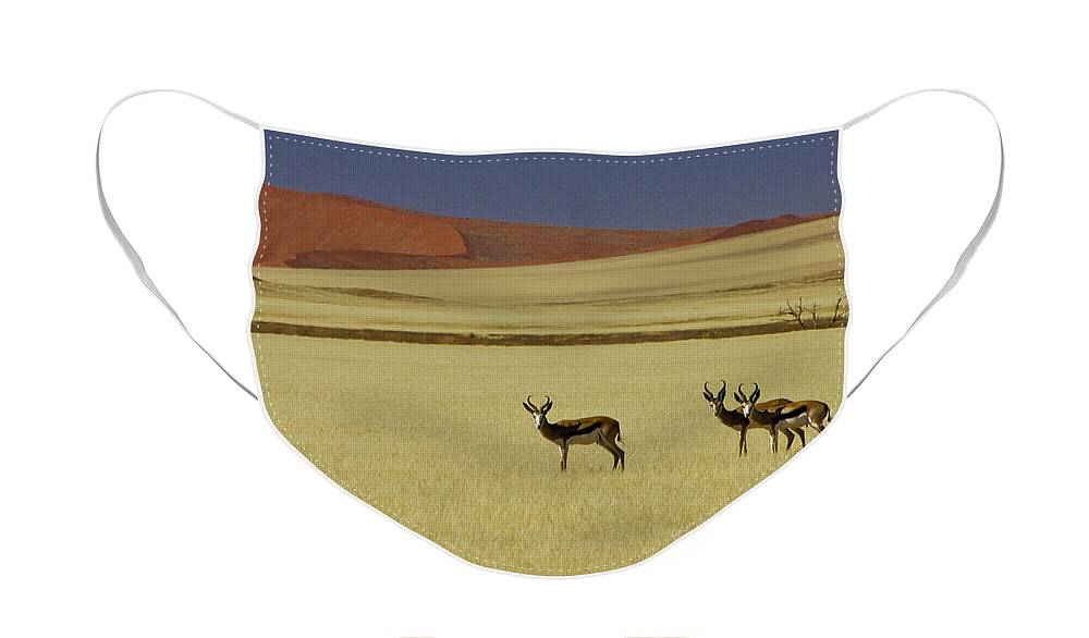 Africa Face Mask featuring the photograph Springbok at Sossusvlei by Michele Burgess