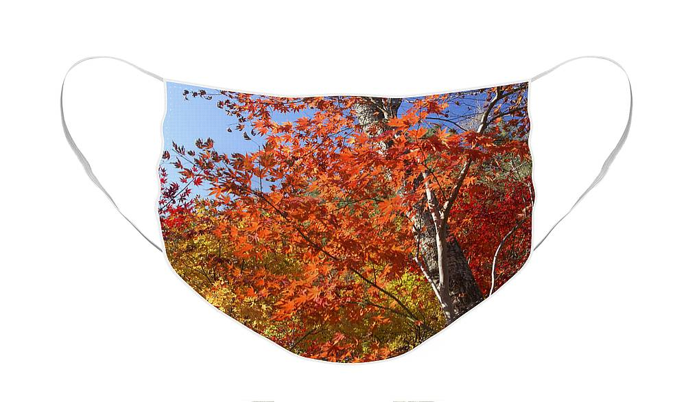 Autumn Face Mask featuring the photograph The Colors of Autumn by Michele Burgess