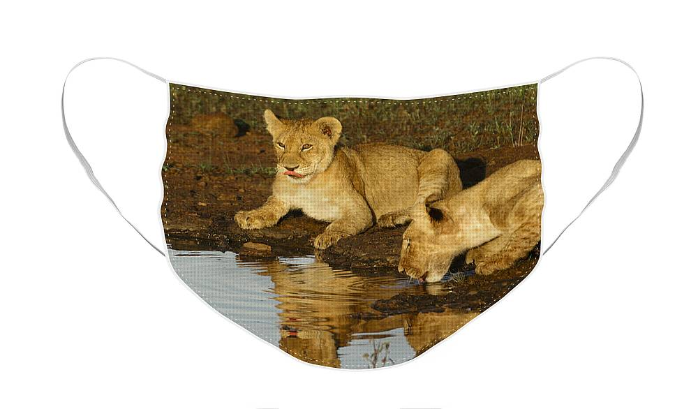 Lion Face Mask featuring the photograph We're Thirsty by Michele Burgess