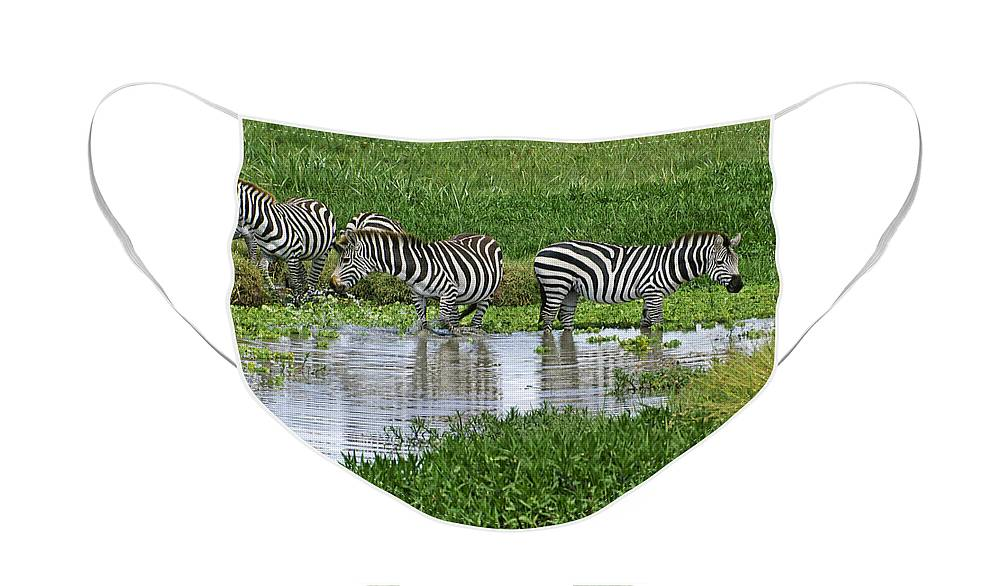 Africa Face Mask featuring the photograph Zebras in the Swamp by Michele Burgess