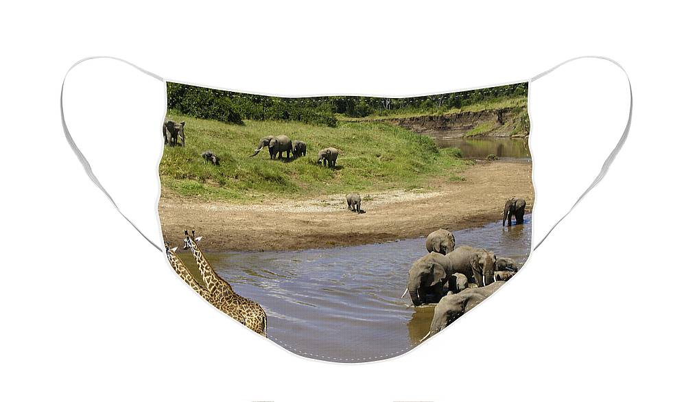 Africa Face Mask featuring the photograph River Crossing by Michele Burgess