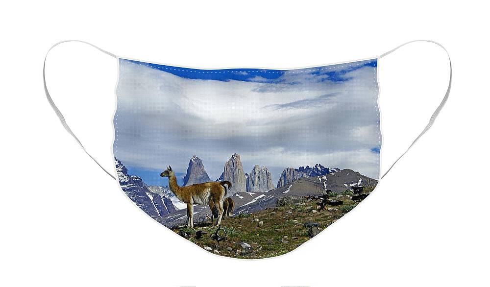 Patagonia Face Mask featuring the photograph Guanacos in Torres del Paine by Michele Burgess