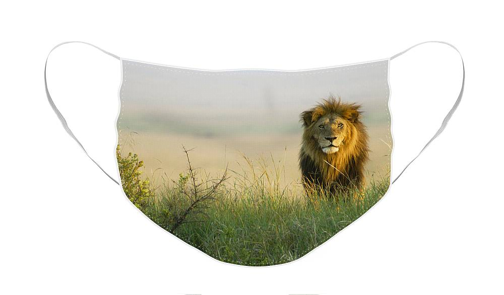 Lion Face Mask featuring the photograph King of the Savanna by Michele Burgess