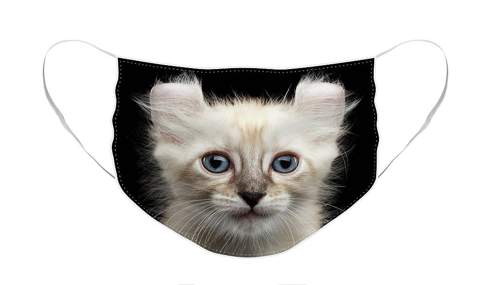 Curl Face Mask featuring the photograph Cute American Curl Kitten with Twisted Ears Isolated Black Background by Sergey Taran