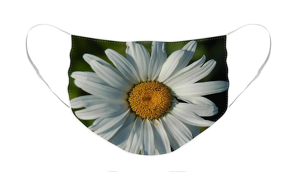 Daisy Face Mask featuring the photograph A Daisy a Day by Suzanne Gaff
