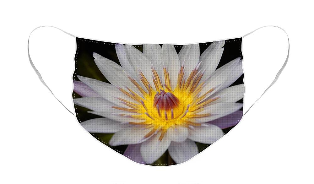 Waterlily Face Mask featuring the photograph A Tinge of Purple by Jean Booth