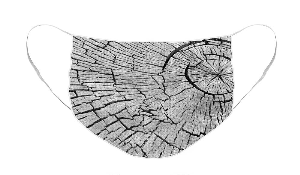 Trees Face Mask featuring the photograph Abstract Tree Cut by James BO Insogna