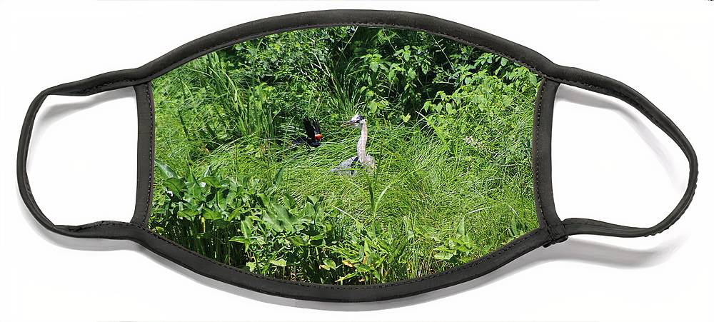 Marsh Face Mask featuring the photograph Annoyed - Heron and Red Winged Blackbird 5 of 10 by Colleen Cornelius