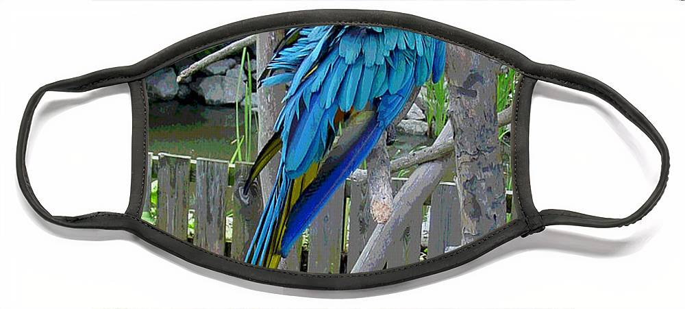 Blue Face Mask featuring the photograph Arent I a Handsome Fellow - Blue and Gold Macaw by Suzanne Gaff