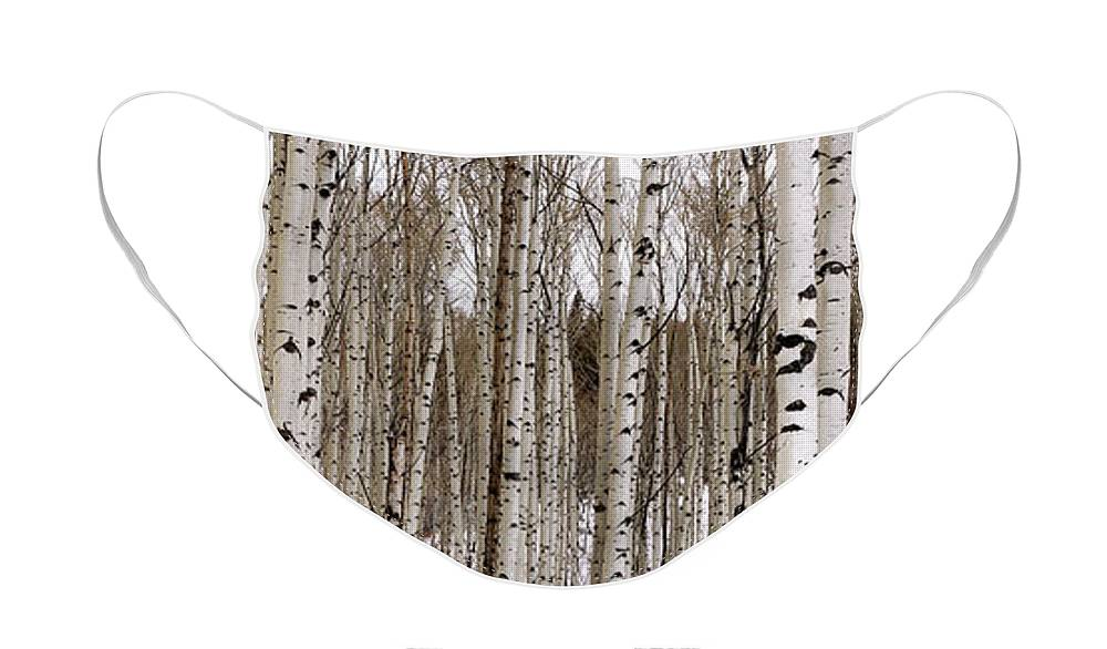 Aspen Face Mask featuring the photograph Aspens In Winter Panorama - Colorado by Brian Harig