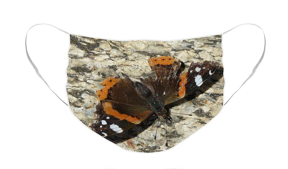 Butterfly Face Mask featuring the photograph Battered Butterfly by Valerie Ornstein