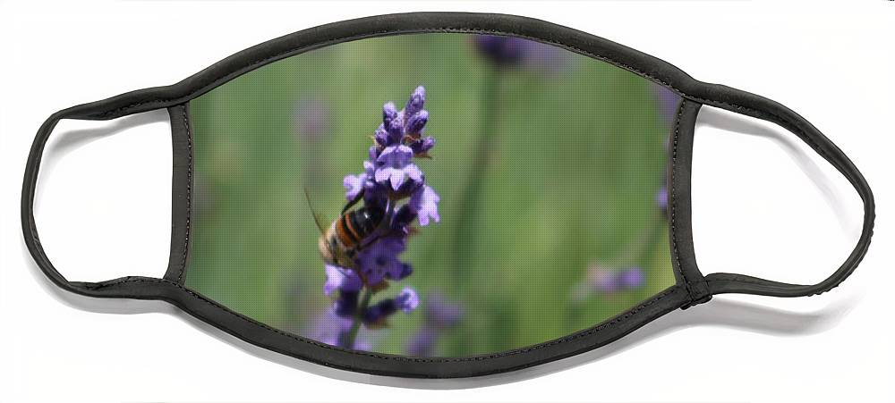 Deep Purple Lavender Face Mask featuring the photograph Bee on Deep Purple Lavender Spike by Colleen Cornelius