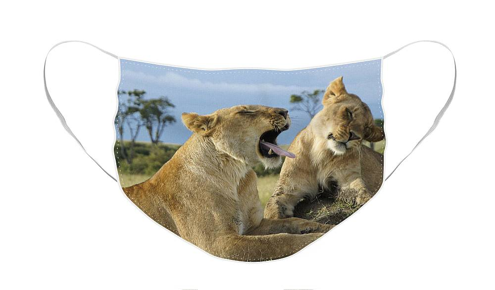Africa Face Mask featuring the photograph Big Blast by Michele Burgess