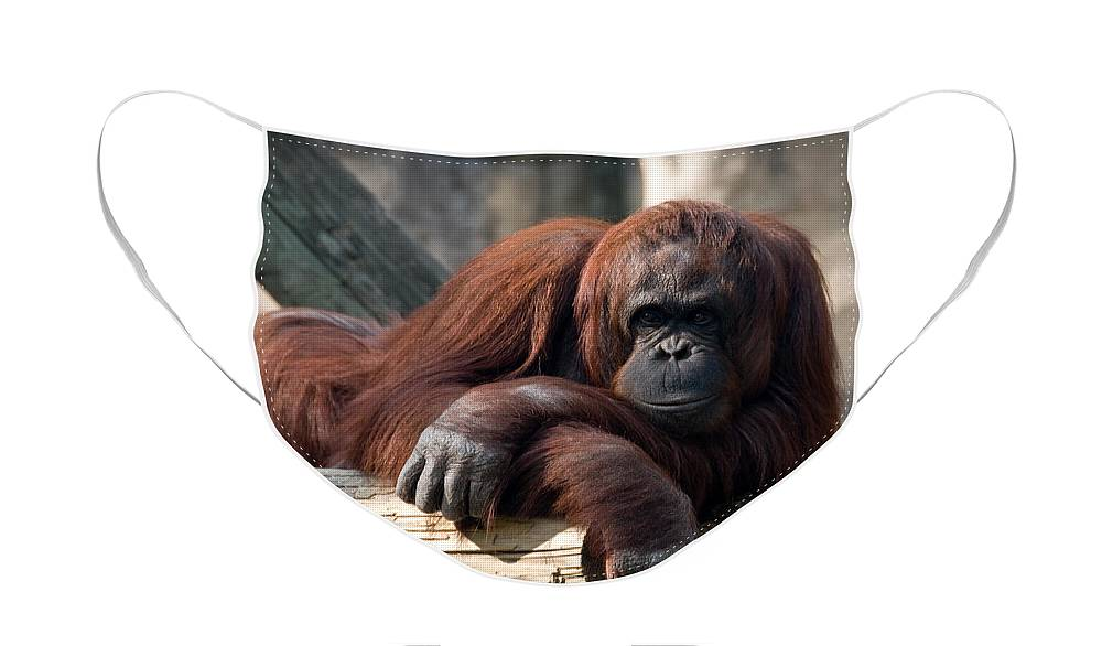 Orangutang Face Mask featuring the photograph Big Hands by Steven Sparks