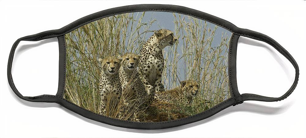 Africa Face Mask featuring the photograph Cheetah Family by Michele Burgess