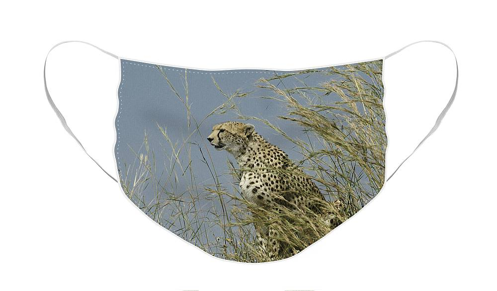 Africa Face Mask featuring the photograph Cheetah Lookout by Michele Burgess