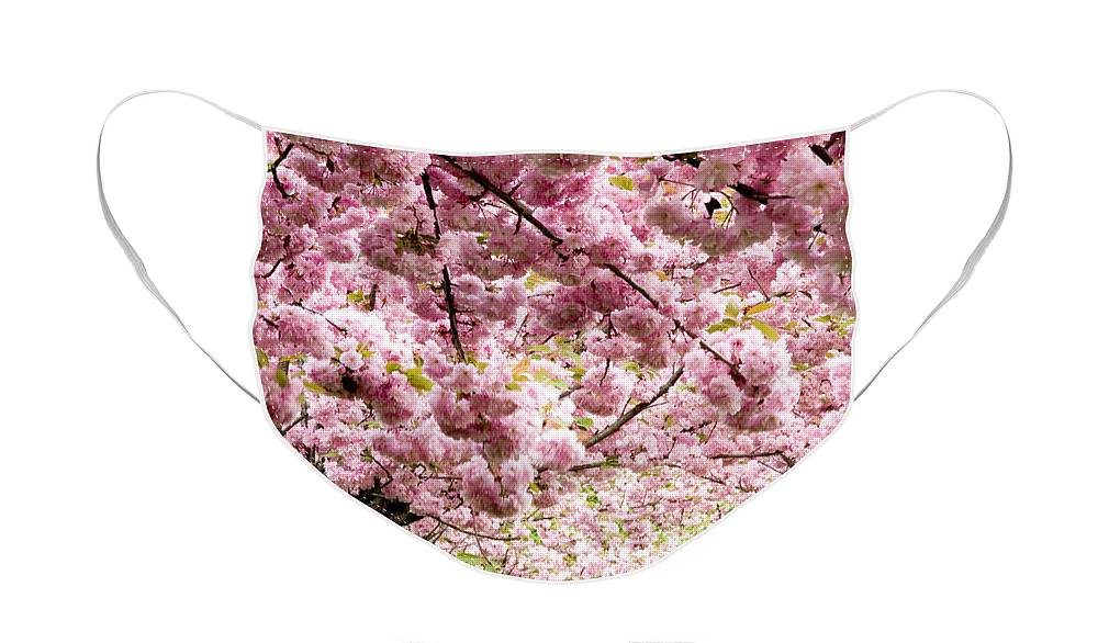 Landscape Face Mask featuring the photograph Cherry Blossoms in Milan Italy by Julia Hiebaum