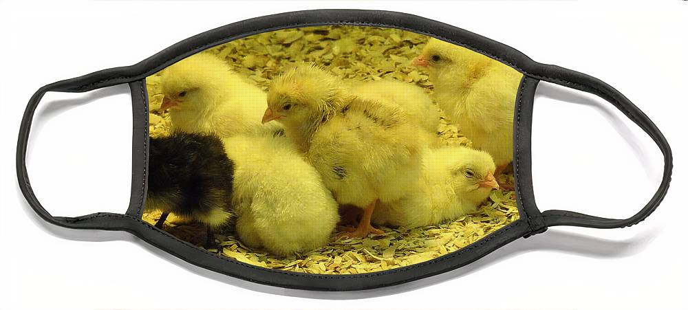 Baby Face Mask featuring the photograph Chicks by Laurel Best