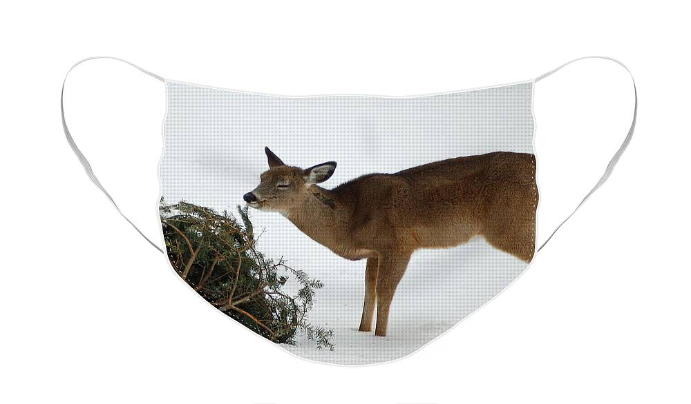 Diane Berry Face Mask featuring the photograph Christmas Tree Snack by Diane E Berry