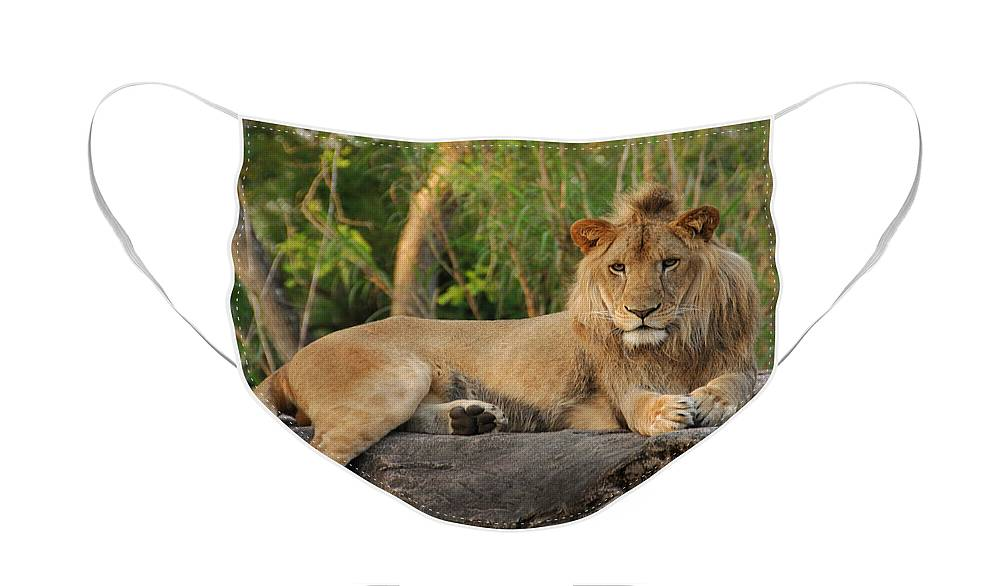 Lion Face Mask featuring the photograph Classic Young Male by Steven Sparks