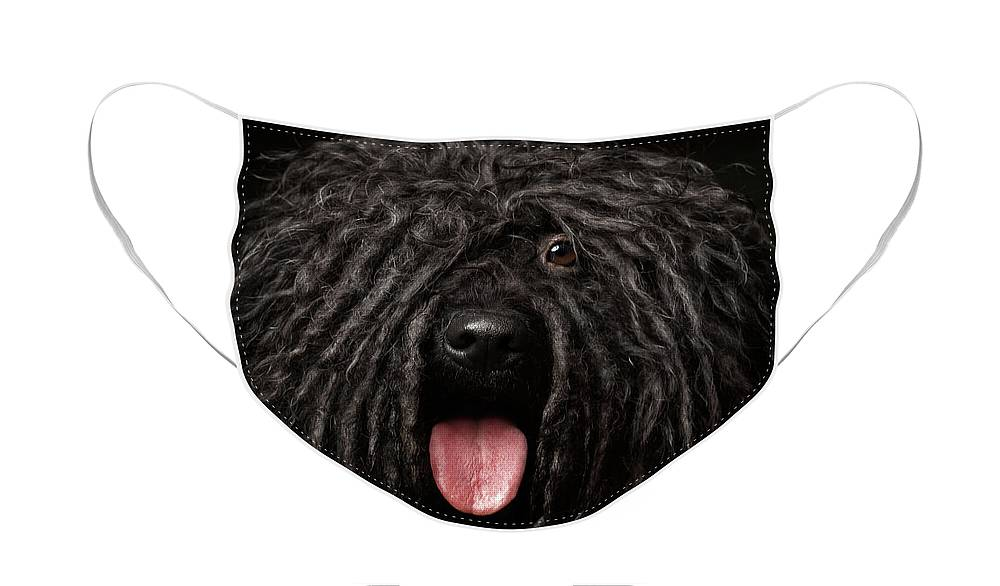 Dog Face Mask featuring the photograph Close up Portrait of Puli Dog isolated on Black by Sergey Taran