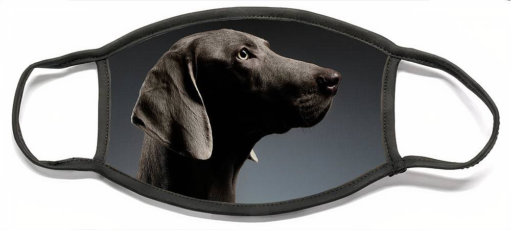 Dog Face Mask featuring the photograph Close-up Portrait Weimaraner dog in Profile view on white gradient by Sergey Taran