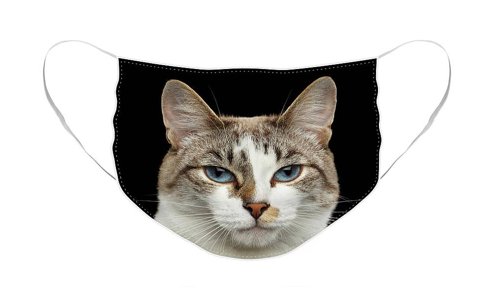 Cat Face Mask featuring the photograph Closeup Portrait of face White Cat, Blue Eyes Isolated Black Background by Sergey Taran