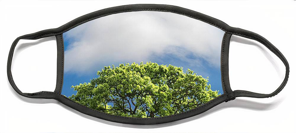 Tree Face Mask featuring the photograph Cloud Cover by Mal Bray