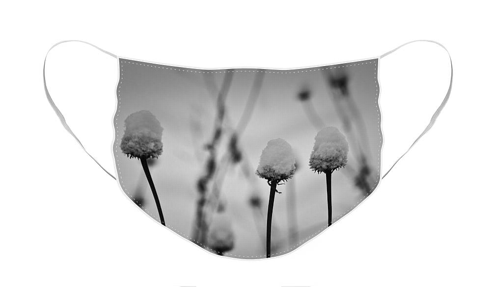 Coneflower Face Mask featuring the photograph Coneflower Seedheads Covered in Snow by Teresa Mucha