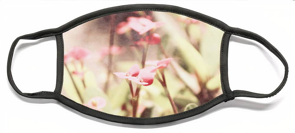 Prism Pink Face Mask featuring the photograph Country Memories in Prism Pink by Colleen Cornelius
