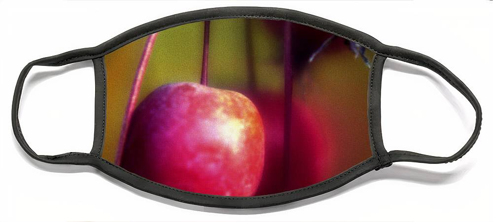 Macro Face Mask featuring the photograph Crabapple by Lee Santa