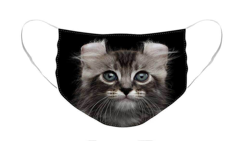 Kitten Face Masks