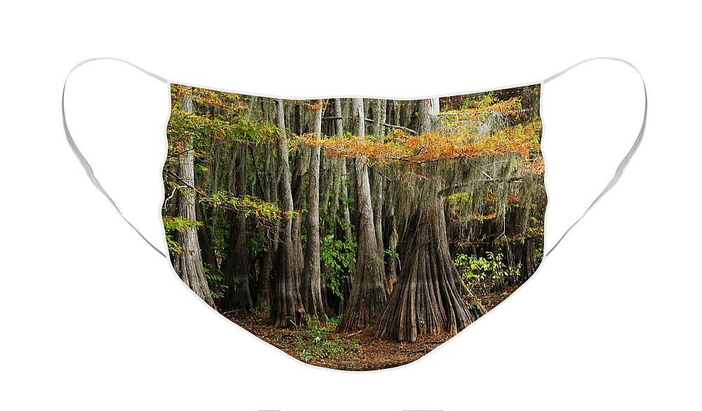 Landscape Face Mask featuring the photograph Cypress Trees Forest by Iris Greenwell