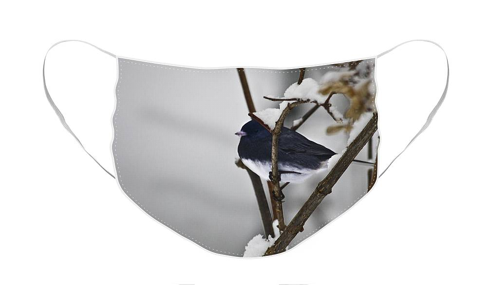 Junco Face Mask featuring the photograph Dark-eyed Junco by Teresa Mucha