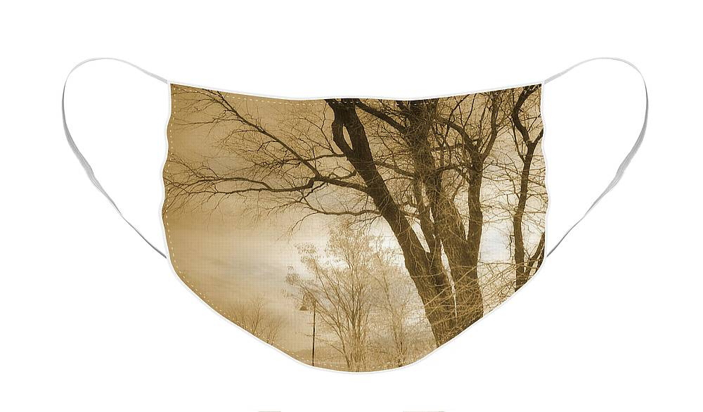 Trees Face Mask featuring the photograph December Glow by Tara Turner