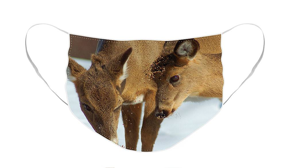 Diane Berry Face Mask featuring the photograph Deer Friends by Diane E Berry